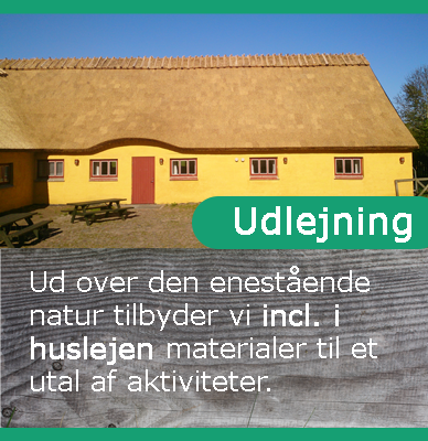 udlejning